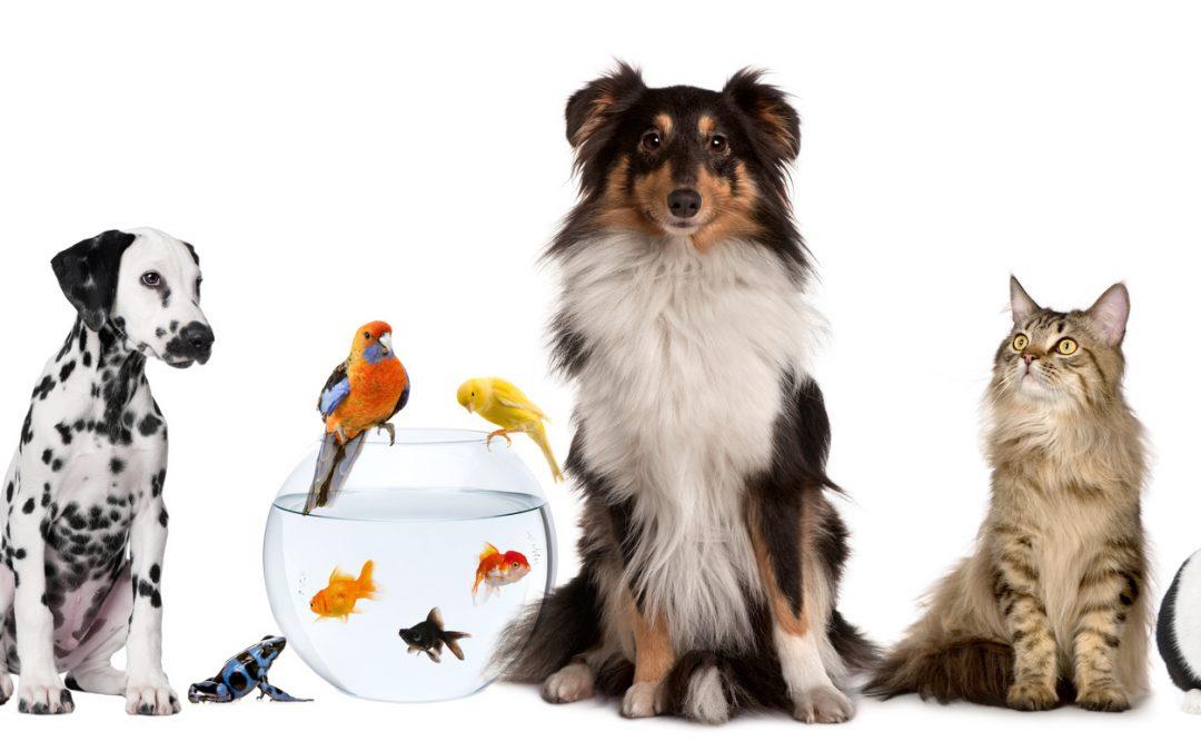 Sobre animais e Espiritismo
